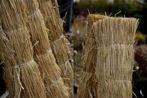 Słomiane maty służą do wykonania chochoła lub płotków osłaniających przed mroźnym wiatrem