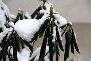 Zwijanie liści to sposób na zmniejszenie transpiracji\