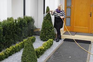 Podlewanie roślin zimozielonych przed zimą