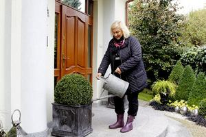 Bukszpany w donicach trzeba bezwzględnie podlać przed zimą
