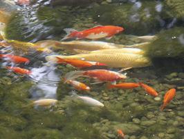 Dzięki temu ryby przetrwają trudny okres zimowy