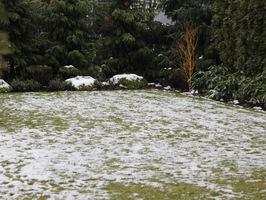 Zimowy trawnik