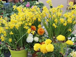 Świąteczna dekoracja kwiatowa