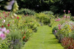 Angielska rabata wypełniona po brzegi różnobarwnymi bylinami