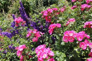 Upojny zapach róż i roślin im towarzyszących umila pobyt w ogrodzie