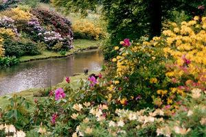 Bogata kolekcja cudownie kwitnących azalii, magnolii, różaneczników i kamelii