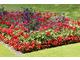 Charakterystyczną modą w epoce wiktoriańskiej było zakładanie w parkach lub przy wielkich posiadłościach dywanowych, podwyższonych rabat obsadzonych bajecznie kolorowymi kwiatami sezonowymi