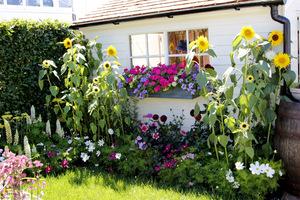 Słodki, wiejski domek otoczony urokliwym ogródkiem ze słonecznikami