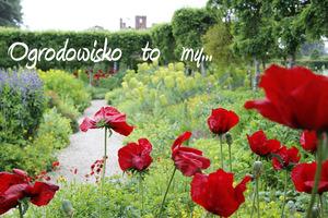 Ogrodowisko  TO  MY