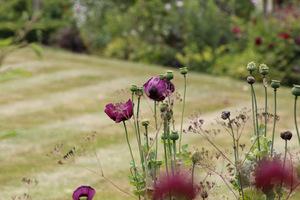 Dzisiaj dni otwarte, dużo gości, chociaż taki skwar. Kwiaty i trawniki na pograniczu życia, wszędzie rozstawione wachlarze