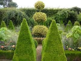 Centrum Dutch Garden - ozdobny Ilex na środku i bukszpanowe topiary