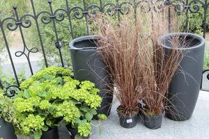 Przynieśliśmy nowe rośliny