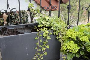 Donica przygotowana do sadzenia