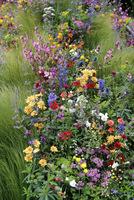 Kolorowa mieszanka kwiatów