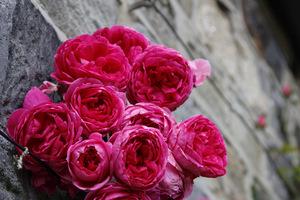 Przecudowny pęk kwitnących róż