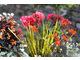 Barwne rośliny sezonowo kwitnące i ozdobne z liści