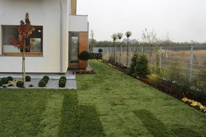 Jeśli listopad jest na plusie, możemy jeszcze zakładać trawniki z rolki