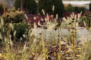 Kwiatostany bylin np. jeżówek, rozchodników pozostawiamy jako pokarm dla ptaków