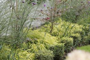 Falująca Hakonechloa macra i Verbena bonariensis