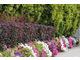 Kaskady kwiatów letnich