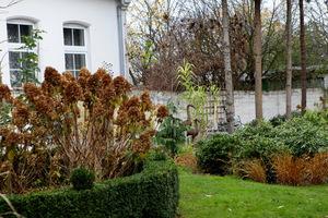 Hortensje jesienią