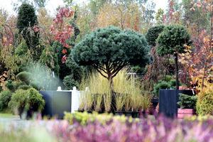 Kusząca kolekcja niezwykłych roślin iglastych