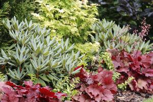 Dzięki dobrze działającemu systemowi rośliny bujnie rosną i kwitną