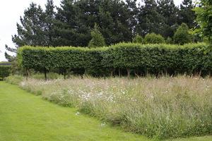 Pośrodku normalny trawnik, a duża powierzchnia obok jako naturalna łąka koszona dwa razy w roku