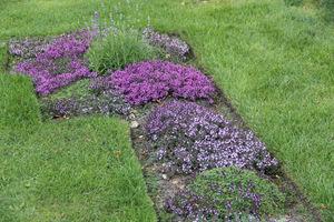 Wzór z macierzanek wycięty w normalnym trawniku