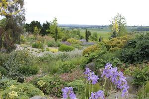 Swobodne kompozycje, które będą w naturalny sposób ewoluowały, wysiewały się i rozprzestrzeniały po ogrodzie