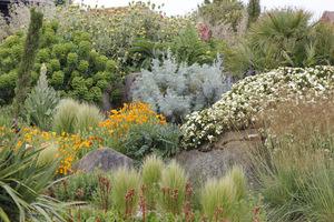 Zróżnicowany wybór roślin - drzewa, krzewy, trawy, byliny i rośliny jednoroczne, a nawet chwasty