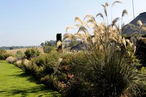 Na pierwszym planie trawa pampasowa