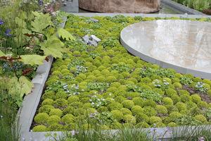 Różnorodne rośliny o pokroju poduchowym, może być nawet mech