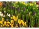 Rośliny do pierwszych kwiatowych aranżacji
