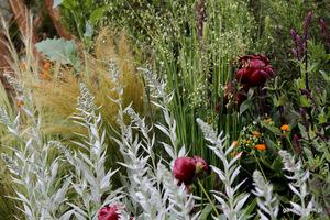 Drżączka, ostnica, szałwia, peonia i srebrne liście bylicy