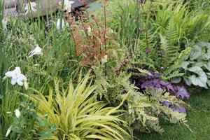 Mieszanka na cieniste stanowiska: paprocie, żurawki, brunera, orliki, hakonechloa