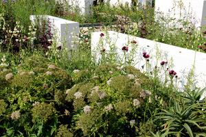 Ostrożeń, białe lilie złotogłów i biedrzeniec odmiany 'Roseum'
