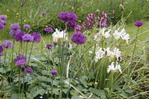 Białe irysy z fioletowymi czosnkami