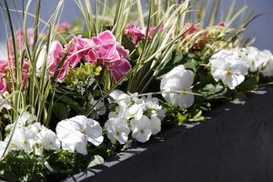 Nowe kompozycje kwiatowe w donicach