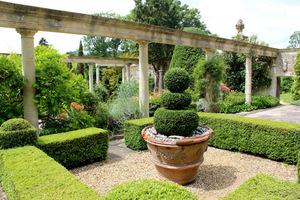 Topiary z bukszpanu w terakotowych donicach