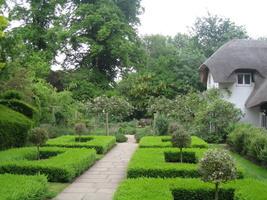Bukszpan w angielskim ogrodzie o wiejskim charakterze