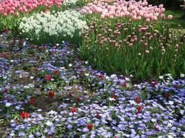 Przykłady zestawień kolorów roślin cebulowych na wystawie