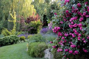 Ogród przepełnia zapach róż