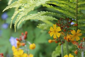 Koronkowe liście paproci i pierwiosnki