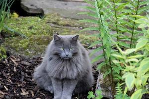 Kot i paprocie