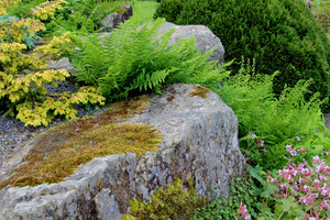 Paprocie i mech na kamieniu
