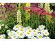 Kolekcja roślin na rabaty letnie