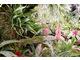 Kolekcja roślin z rodziny Ananasowate