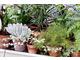 Kolekcja roślin
