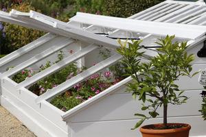 Białe inspekty z roślinami ozdobnymi